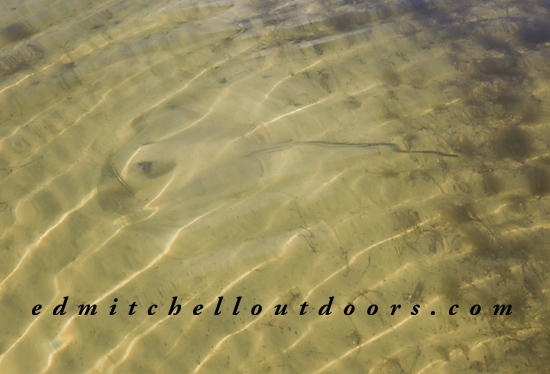 Sting Ray in the Sand
