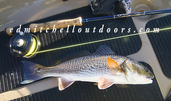 Fly Caught Redfish