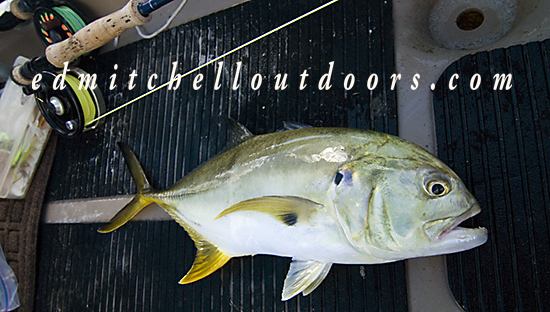 Jacks Crevalle on a fly