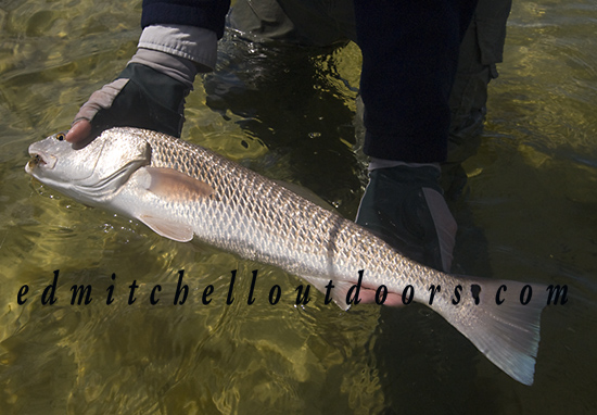 """Heave"" and ""Leave"" Redfish"