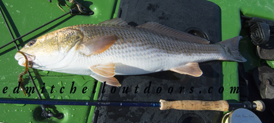 Eight Pound Redfish