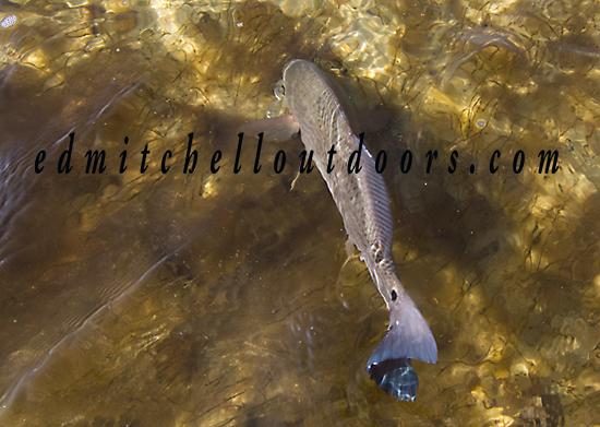 December Redfish