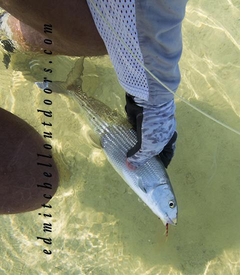 Deadman's Cay Bonefish