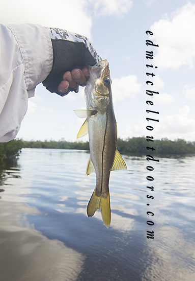 Miniature Snook