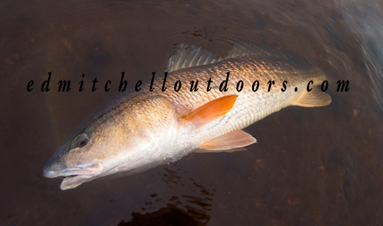 Released 9 LB Redfish