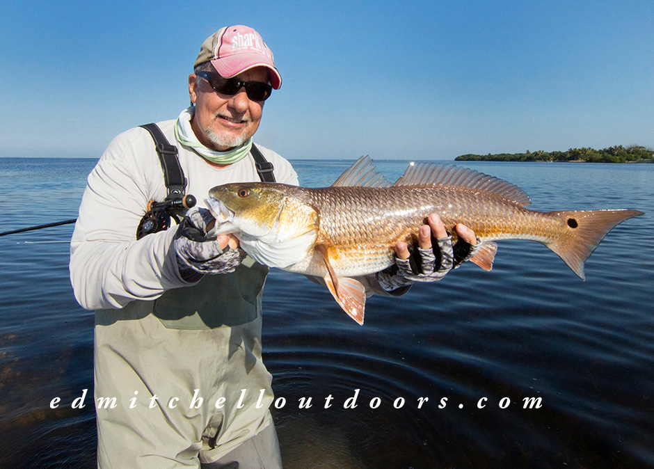 "Yesterday Morning's ""Tailing"" Redfish"